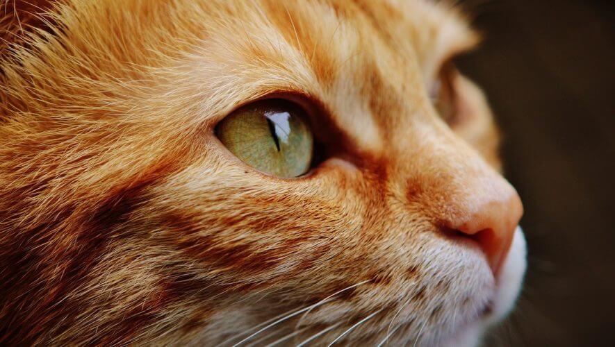 accounting-news-cat-trust
