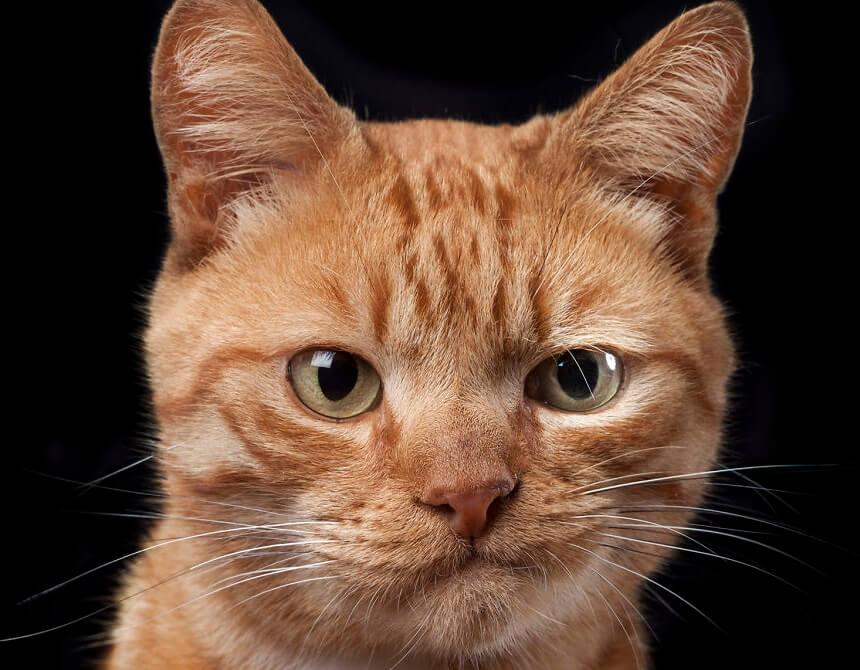 tax-reform-cpa-skeptical-cat-crop
