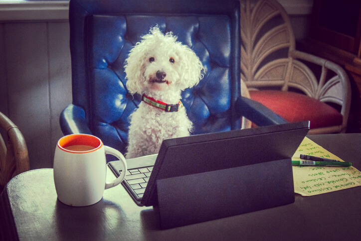 accounting-news cpa dogs
