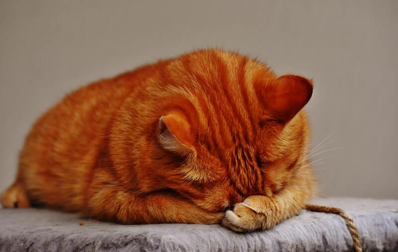 accounting news us chamber embarrassed cat