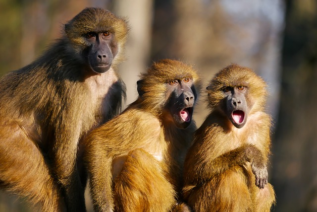 Shocked monkeys